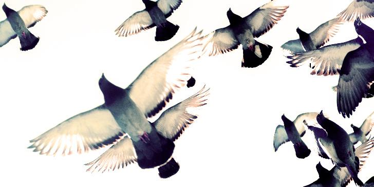 逃げるように羽ばたくハト